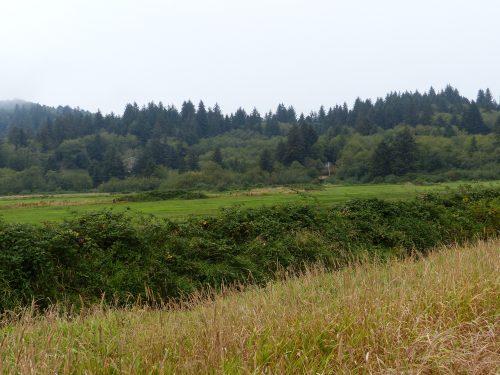 Cloverdale-Tillamook Meadow